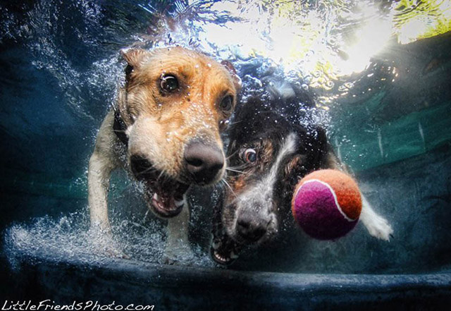 underwater_dog_photography_12
